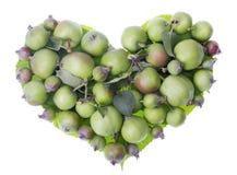 Het hart van appelen Stock Foto