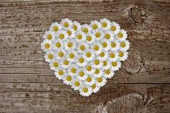 Het hart van Daisy Stock Foto