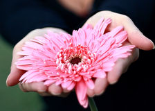 Het hart van de bloem Stock Foto's