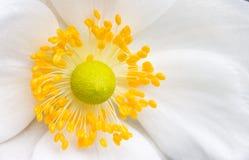 Het hart van de bloem Royalty-vrije Stock Foto's