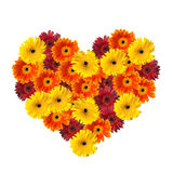 Het hart van de bloem Stock Afbeelding