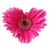 Het hart van de bloem Royalty-vrije Stock Fotografie