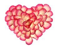 Het hart van de bloemblaadjes van nam toe Stock Foto's