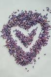 Het Hart van de valentijnskaartendag van lavendelbloem die wordt gemaakt Stock Fotografie