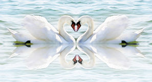 Het hart van de zwaan Stock Afbeeldingen