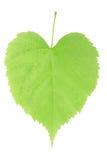 Het hart van het blad Royalty-vrije Stock Afbeelding