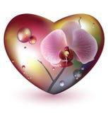 Het hart van het glas met orchideebloem. Vector. EPS 10 Stock Foto's