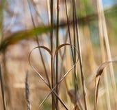 Het hart van het gras Stock Foto's