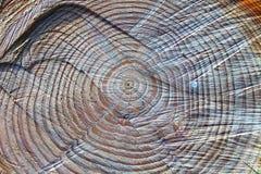 Het hart van het hout stock fotografie