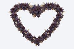 Het hart van kruiden Stock Afbeeldingen