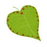 Het hart van lieveheersbeestjes Stock Afbeeldingen