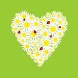 Het hart van madeliefjes met onzelieveheersbeestjes Royalty-vrije Stock Afbeeldingen
