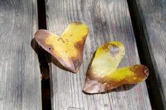 Het hart vormde bladerenclose-up Stock Foto's