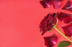 Het hartstochtsconcept voor de dag van Valentine met donkerrood nam en bloemblaadjes op een rode achtergrond toe royalty-vrije stock fotografie