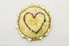 Het hartvorm van het zonnebloem hoofddieverstand van de zaden wordt gemaakt Stock Foto's