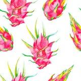 Het Hawaiiaanse Naadloze Patroon van Aloha Exotisch bladeren en fruit Vector Dragonfruit, pitaya, pitahaya Pitaya is binnen de in Royalty-vrije Stock Afbeelding