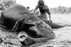 Het Heiligdom van de Kodanadolifant - olifant baden wordt uitgevoerd met zichtbare bewaarders en boomstam die naar zwart-witte ki royalty-vrije stock foto