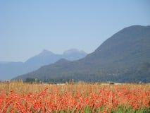 Het heldere contrast van kleurengewassen met het mountian backdropRafting in de Britse bergen van Colombia stock foto's