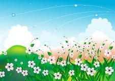 Het heldere landschap van de zomer met witte bloemen Stock Fotografie