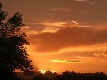 Het heldere oranje art. van zonsondergangbomen royalty-vrije stock afbeelding