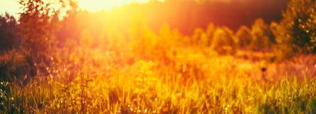 Het Heldere Zonlicht van Autumn Grass Meadow Close-Up With Stock Afbeelding