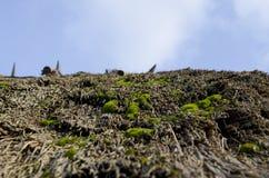 Het heldergroene mos groeit op het oude met stro bedekte dak op een achtergrond van blauwe hemel royalty-vrije stock afbeeldingen