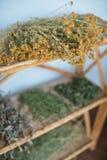 het helen van kruiden die op rek drogen Kruiden perforatum Medicine stock foto