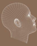 Het helft-gezicht wireframe geeft jonge vrouw terug Stock Foto's