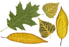 Het herbarium van de herfst Stock Foto's