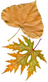 Het herbarium van de herfst Stock Foto