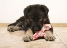 Het herdershondpuppy royalty-vrije stock foto's