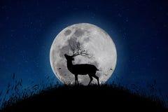 Het hert bevindt zich op de berg een grote maanachtergrond in de nacht dat de sterren van hemel volledig zijn royalty-vrije stock foto