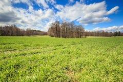 Het het groene gras en bos van het korrelgebied Stock Foto's