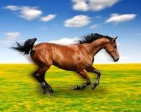 Het het lopen paard stock foto's