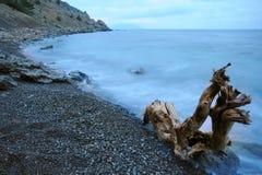 Het het nachtoverzees en hout Royalty-vrije Stock Foto