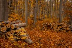 Het het programma openen van het bos Stock Fotografie