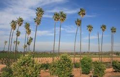 Het Historische Park van de citrusvrucht Royalty-vrije Stock Afbeelding