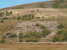 Het hoeden van schapen Royalty-vrije Stock Afbeeldingen