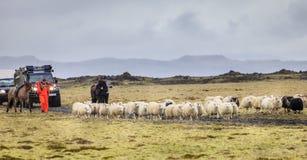 Het hoeden van schapen Stock Afbeeldingen