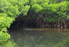 Het Hoekje van het Water van de mangrove stock foto
