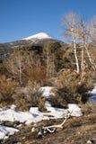 Het hoge Gebied Nevada Landscape Antlers van het Berg Piek Grote Bassin stock afbeelding