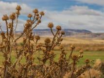Het hoge Landschap van de Woestijn royalty-vrije stock afbeelding