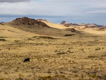 Het hoge Landschap van de Woestijn royalty-vrije stock afbeeldingen