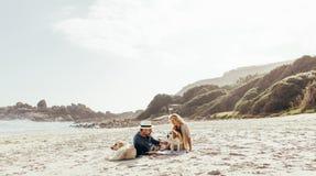 Het hogere paar ontspannen op strand met huisdierenhonden stock afbeeldingen