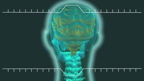 Het hogere sectie doorzichtige menselijk lichaam roteren vector illustratie