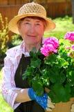 Het hogere vrouw tuinieren Stock Foto