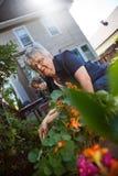 Het hogere vrouwen tuinieren Stock Afbeelding