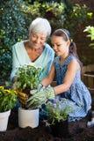 Het hogere vrouwenonderwijs die aan kleindochter bij binnenplaats tuinieren stock afbeelding