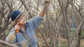 Het hogere vrouwentuinman zagen vertakt zich fruitboom terwijl het tuinieren het werk stock video