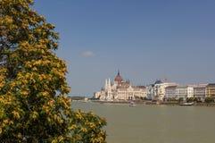 Het Hongaarse Parlement op de dijk van de rivier van Donau Royalty-vrije Stock Foto's